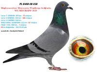 1. PL-0480-20 -  WG MISTRZÓW 7 GOŁĄB Z FINAŁU