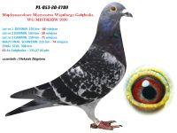 2. PL-053-2709 - WG MISTRZÓW 7 GOŁĄB Z FINAŁU