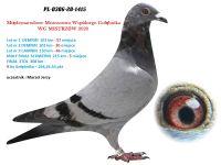 3. PL-0306-1415 - WG MISTRZÓW 5 GOŁĄB Z MAŁEGO FINAŁU i 9 AS WG