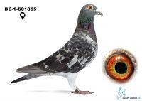 B-13-6031855 Ivo Renders