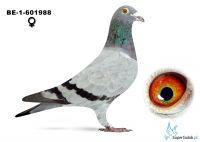 B-13-6031988  Ivo Renders
