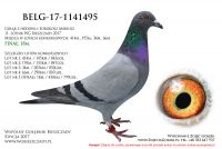 BELG-17-1141495