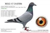 BELG-17-2145584