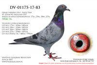 DV-01175-17-83