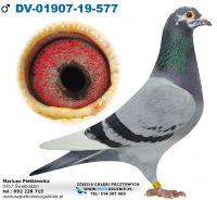 DV-01907-2019-577-Linia Dirk Van Den Bulck-Linia ,,Gode Rode
