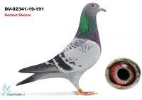DV-02341-19-191