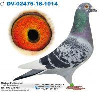 DV-02475-2018-1014-Org. Raimund Suchy