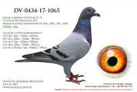 DV-0434-17-1065