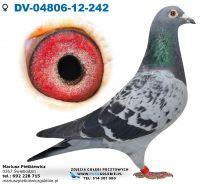 DV-04806-2012-242-Org. Peter Trost