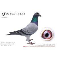 DV-0507-11-1350,