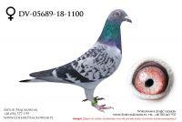 DV-05689-18-1100 - samiczka