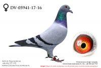 DV-05941-17-16 - samiczka