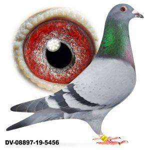 DV-08897-19-5456 SG Steffl