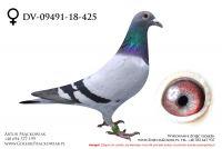 DV-09491-18-425 - samiczka