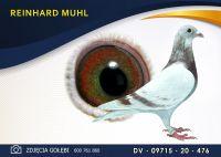 DV 09715 20 476 Oryginał  MUHL REINHARD -  Wnuk