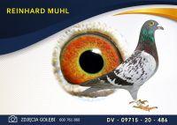 DV 09715 20 486 Oryginał  MUHL REINHARD -  HERBOTS - Wnuk Yvana