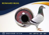 DV 09715 20 501 Oryginał  MUHL REINHARD -  Marcel Wouters