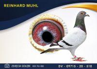 DV 09715 20 510 Oryginał  MUHL REINHARD