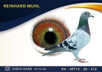 DV 09715 20 512 Oryginał  MUHL REINHARD -  Wnuk