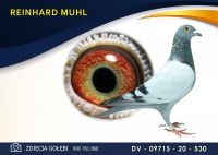 DV 09715 20 530 Oryginał  MUHL REINHARD - wnuk