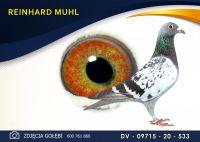 DV 09715 20 533 Oryginał  MUHL REINHARD -  Wnuk