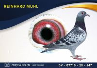 DV 09715 20 547 Oryginał  MUHL REINHARD - Jan Hooymans