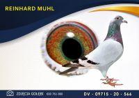 DV 09715 20 566 Oryginał  MUHL REINHARD -  Wnuk RUDEGO!! G. Vandenabeele - Gołąb Młody.