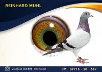 DV 09715 20 567 Oryginał REINHARD MUHL -  wnuk RUDEGO - G. Vandenabeele -