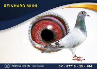 DV 09715 20 584 Oryginał  MUHL REINHARD -  Paul Huls x Paul Huls