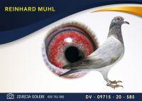 DV 09715 20 585 Oryginał  MUHL REINHARD -  PAUL HULS  - płeć przedstawiona w rodowodzie.