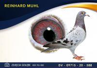 DV 09715 20 588 Oryginał REINHARD MUHL - Dirk van Dyck -