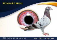 DV 09715 20 591 Oryginał  MUHL REINHARD -  C & G Koopman x Gunter Prange -