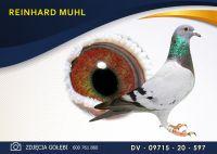 DV 09715 20 597 Oryginał  MUHL REINHARD - Wnuk 2 x