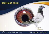 DV 09715 20 598 Oryginał  MUHL REINHARD - Wnuk 2 x