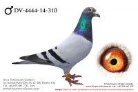 DV-4444-14-310 - likwidacja hodowli