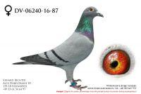 DV-6240-16-87, z hodowli Erharda Richtera
