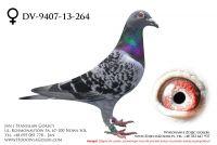 DV-9407-13-264 - likwidacja hodowli
