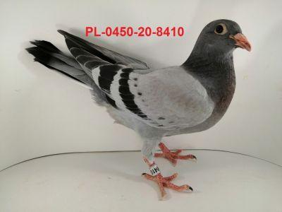 FLOREK  RYSZARD   PL-0450-20-8410   LINIA
