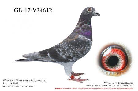 GB-V-17-34612
