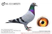 NL-13-1405271 - likwidacja hodowli