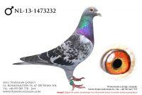 NL-13-1473232 - likwidacja hodowli