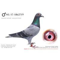 NL-17-1862719, z hodowli H Beverdam