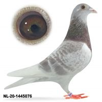 NL-20-1445076