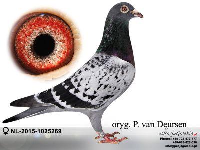 NL-2015-1025269-P. van Deursen