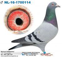 Nl-2016-1700114-Org. Piet Van Deursen