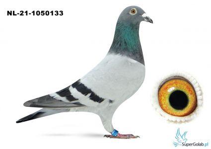 NL-21-1050133