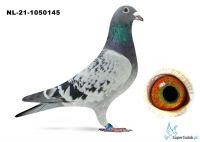 NL-21-1050145