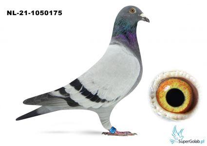 NL-21-1050175