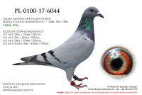 PL-0100-17-6044