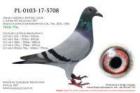 PL-0103-17-5708